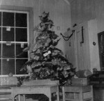 black and white photo of a decorated evergreen tree in a classroom
